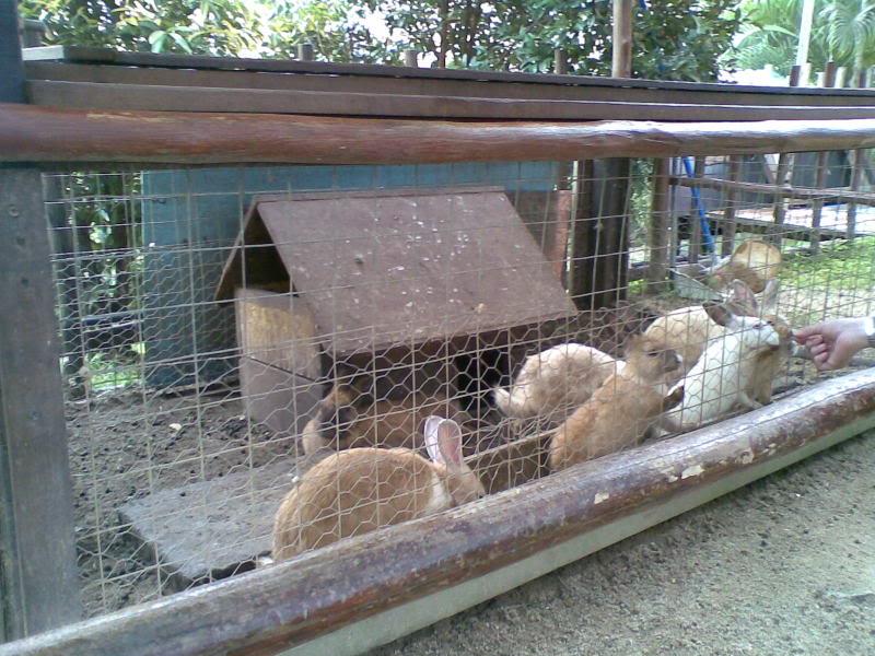 Содержание кроликов в вольерах: плюсы и минусы такого метода | свое хозяйство