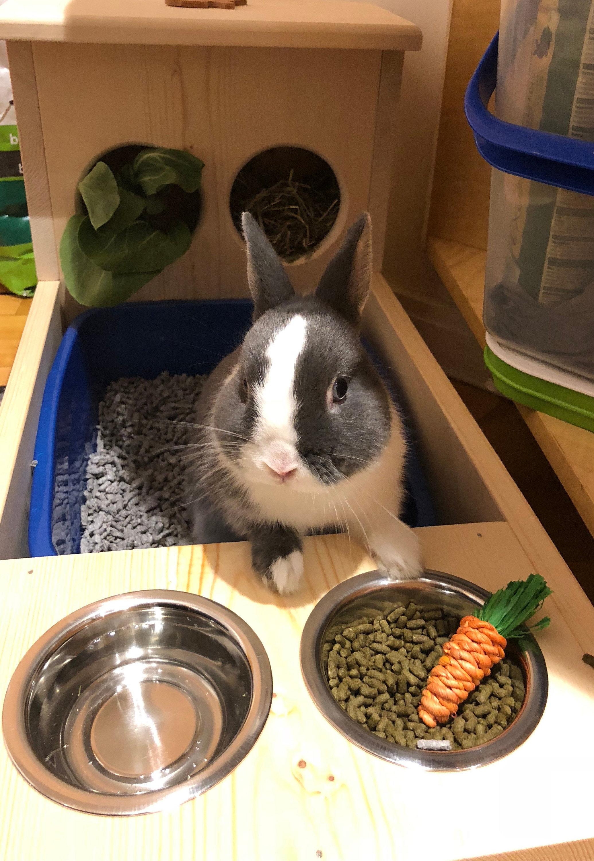 Рацион питания кролика в день в домашних условиях