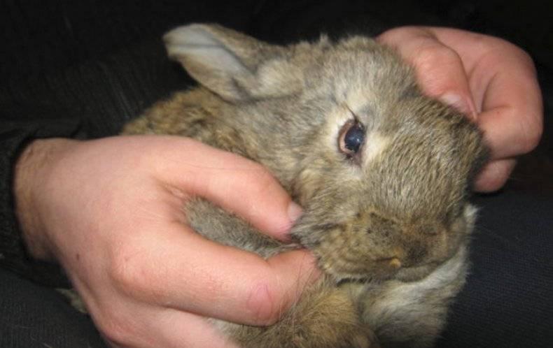 У кролика слезится один глаз что делать и чем лечить