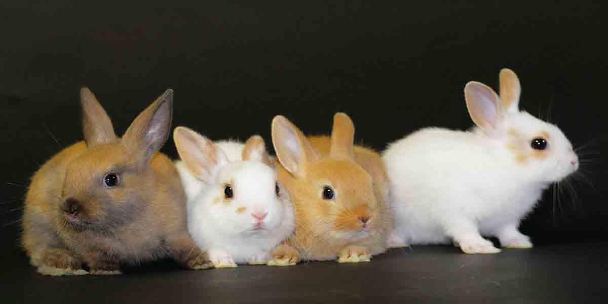 Крольчиха кусается и рычит. кусаются ли кролики? почему кролик хрюкает
