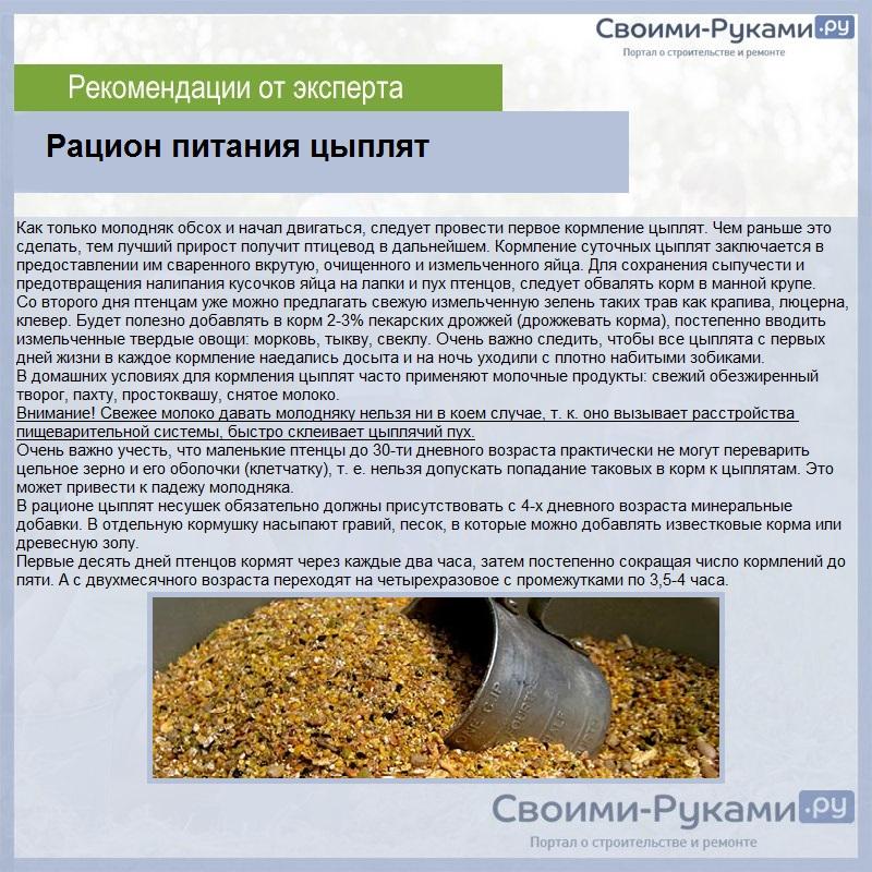 Выращивание цыплят в домашних условиях- инструкция по разведению