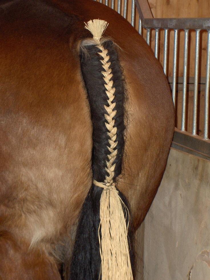 Зачем лошади нужна грива и как за ней ухаживать | мои лошадки