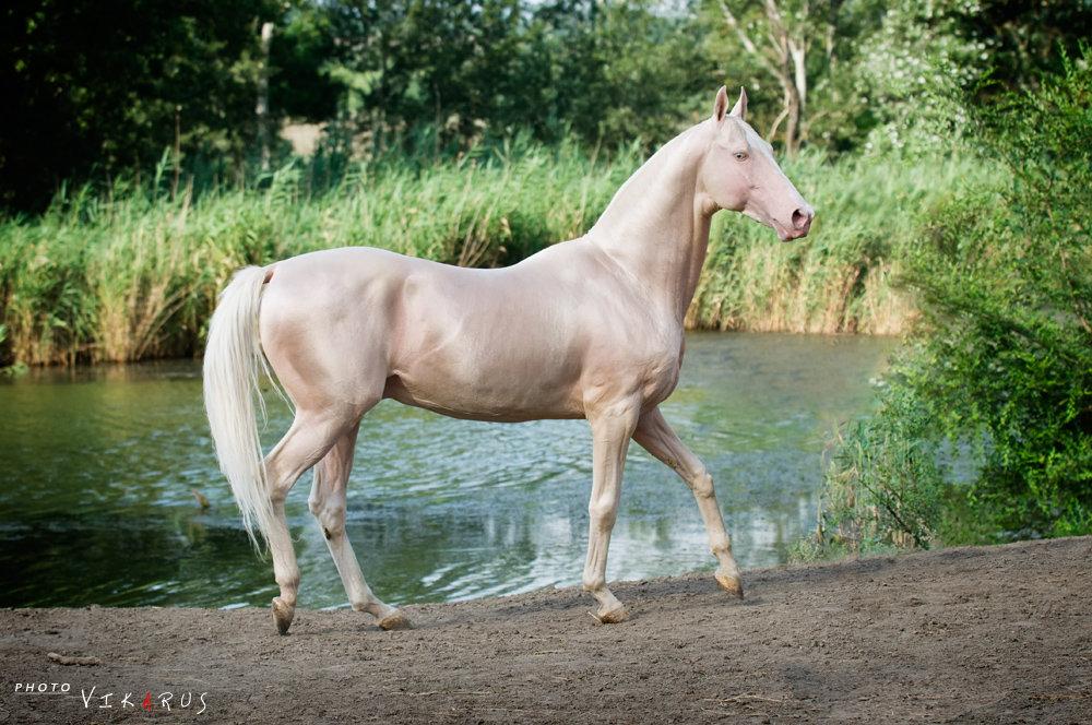 Название и описание мастей лошадей с фотографиями