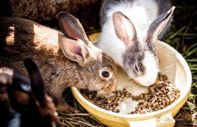 Что едят кролики - виды кормов, рацион питания, пищевые нормы