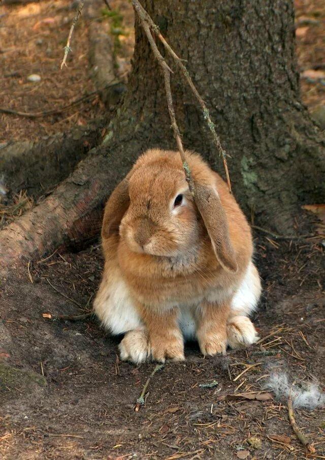 Все о продолжительности жизни кроликов