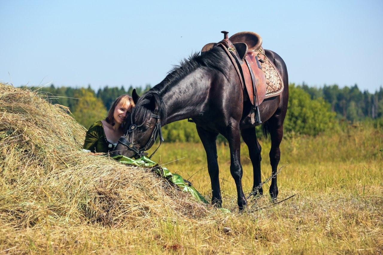 Как приручить лошадь в майнкрафте. способы приручения лошади в майнкрафте