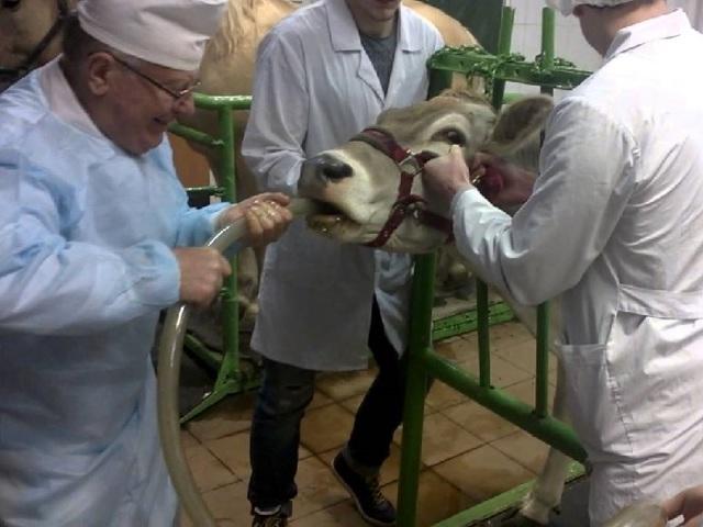 Болезни коз: симптомы и лечение