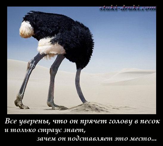 Почему страус прячет голову в песок: делает ли он это на самом деле, как ведёт себя в