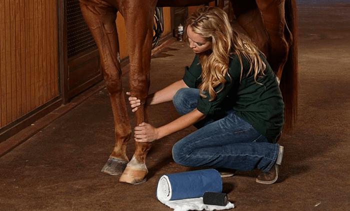 Проект содержание лошади в домашних условиях