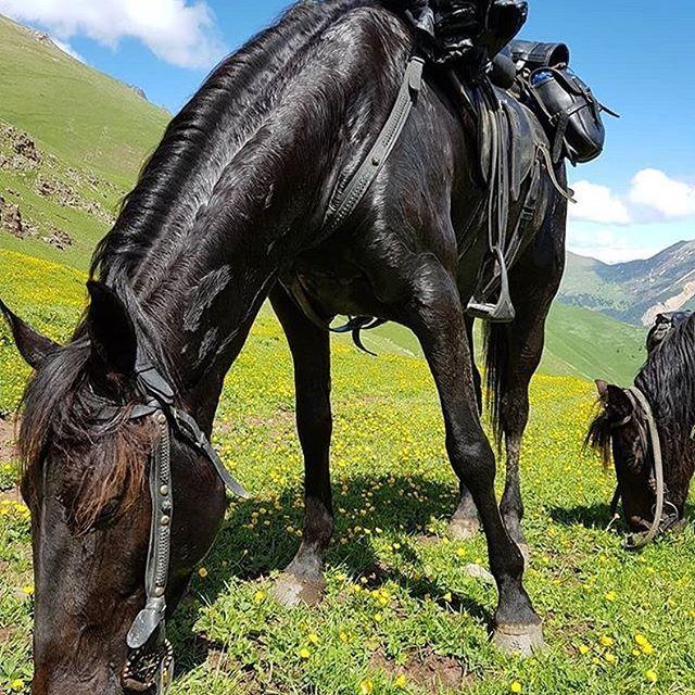 Карачаевская порода лошадей: описание, фото, история, характерные особенности
