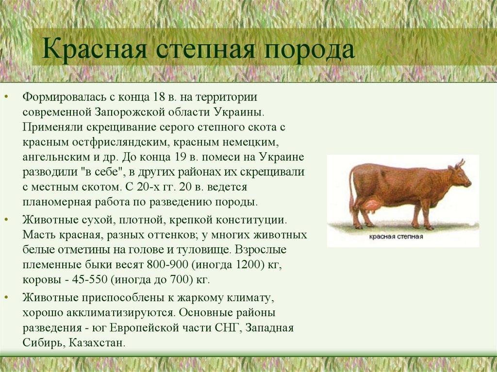 Породы коров с фото и названиями: описание каждой породы