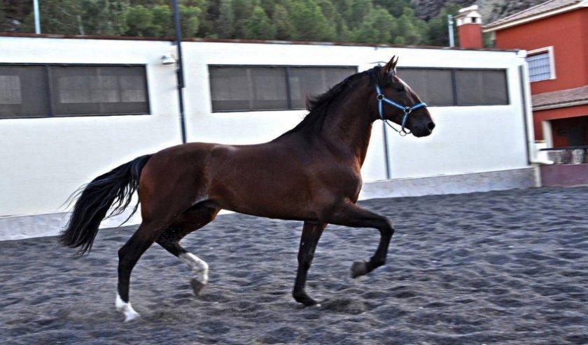Максимальная скорость лошади: какие породы развивают самую быструю скорость