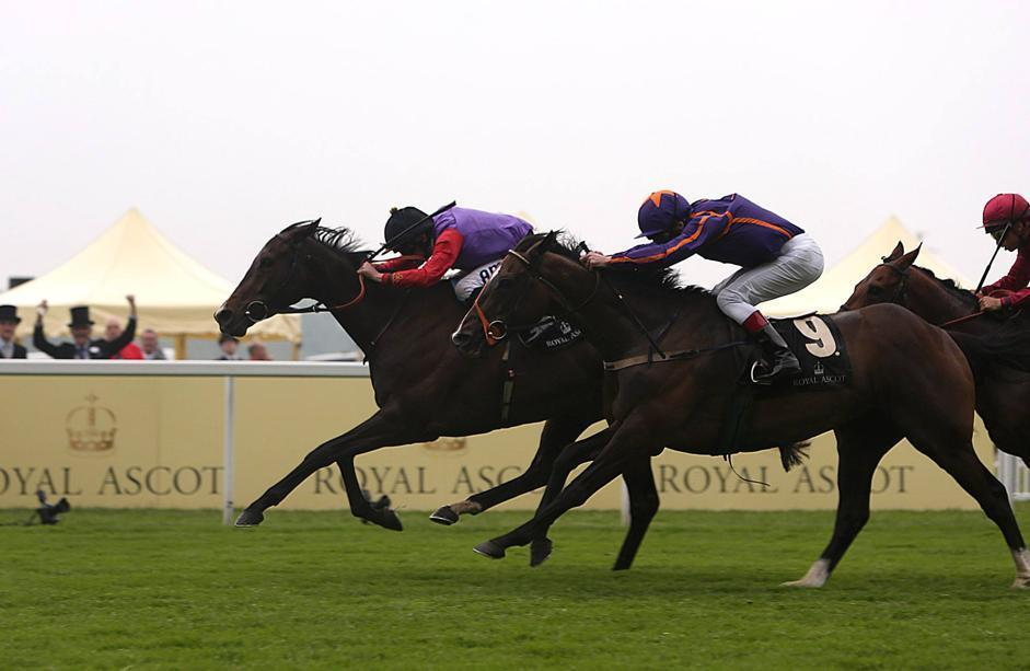 ᐉ с какой скоростью бегает скаковая лошадь, рекорды на скачках - zooon.ru