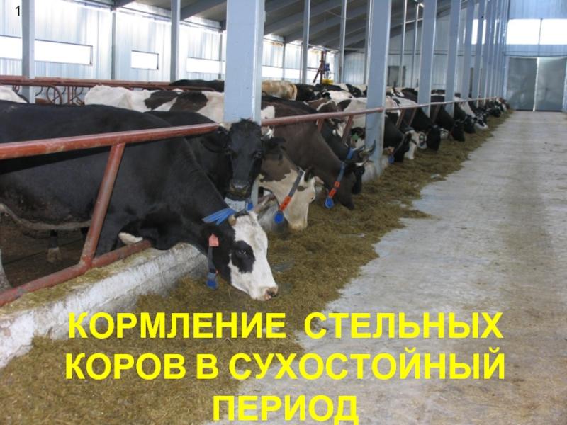 Технология кормления и содержания стельных и сухостойных коров