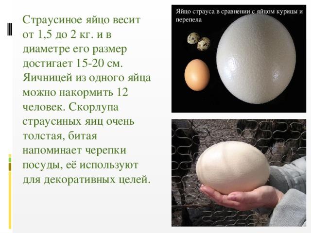 Сколько весит куриное яйцо: вес желтка и белка, вареного и сырого яйца, без скорлупы