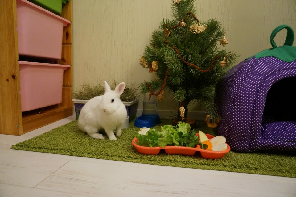 Все о разведении декоративных кроликов в домашних условиях