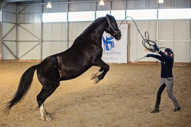 Как обучить лошадь верховой езде — полезные советы