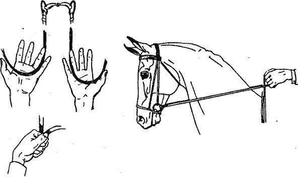 Как ездить на лошади: правила для всадников, управление животным, команды, ошибки новичков