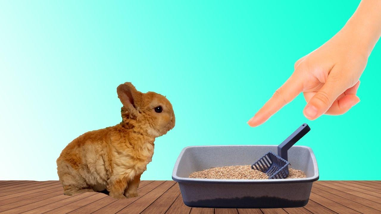 Как приучить кролика к ниппельным поилкам