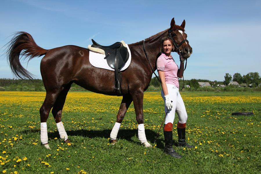 Обучение лошади трюкам: испансикй шаг, поклон, присаживание, поцелуй