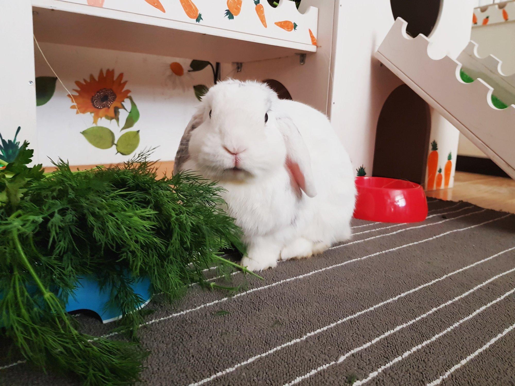 Уход и содержание декоративных кроликов: основные правила,