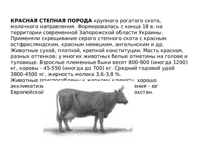 ✅ о красной степной породе коров: описание и характеристики, содержание, уход - tehnomir32.ru