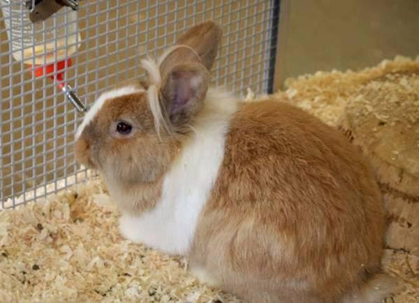 Кокцидиоз у кроликов. профилактика и лечение. | кролики. разведение и содержание в домашних условиях