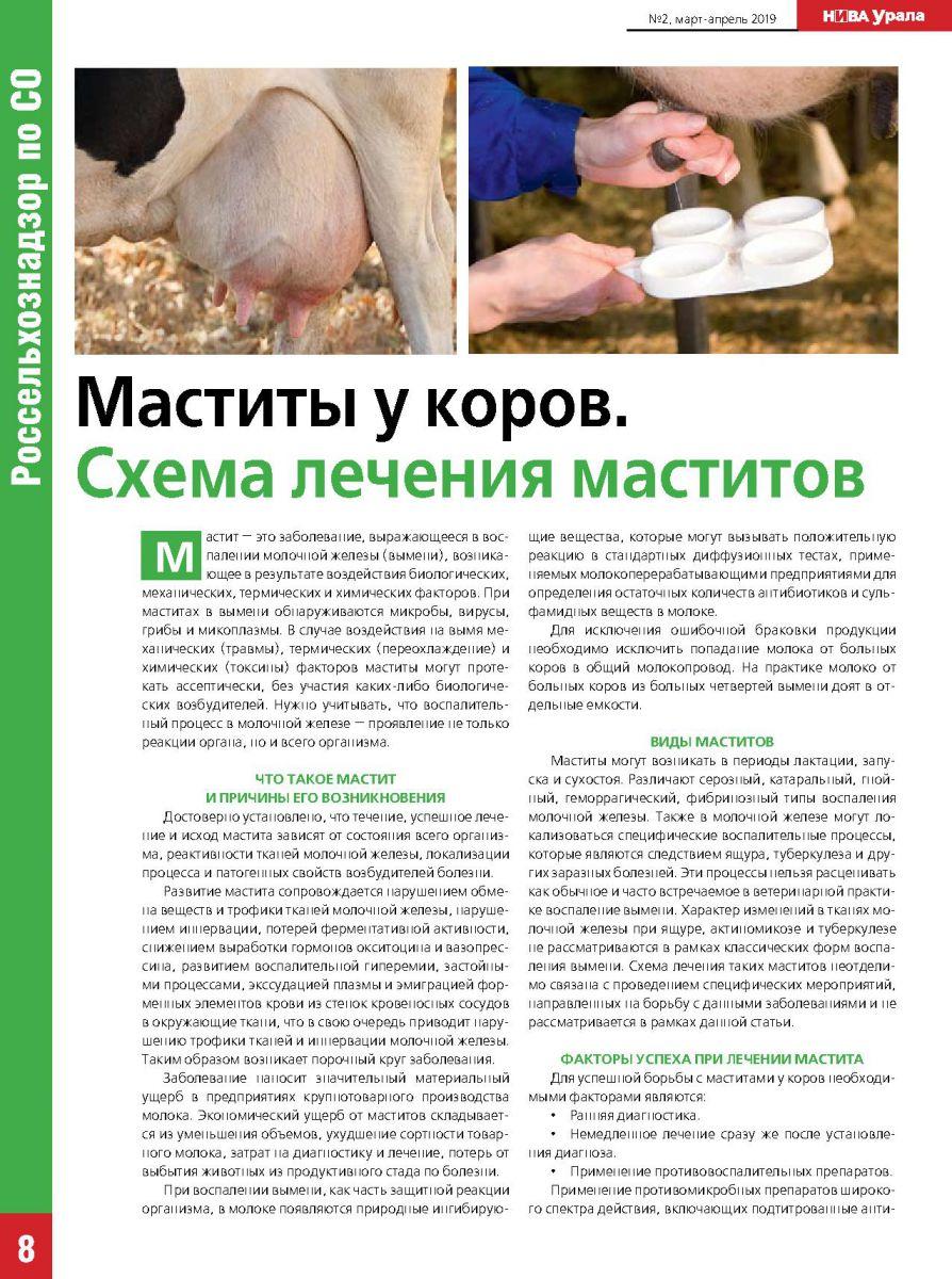 Чем лечить мастит у коровы: народные средства и антибиотики