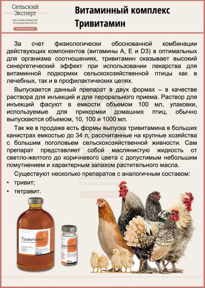Лечение кур водкой: особенности лечения и дозировки - домашние наши друзья