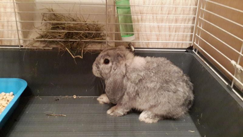 Бизнес план «мини ферма по разведению кролиководства»