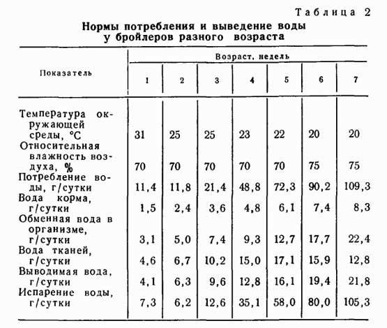 Сколько растут гуси до забоя и как подготовить птицу | 7kyr.ru