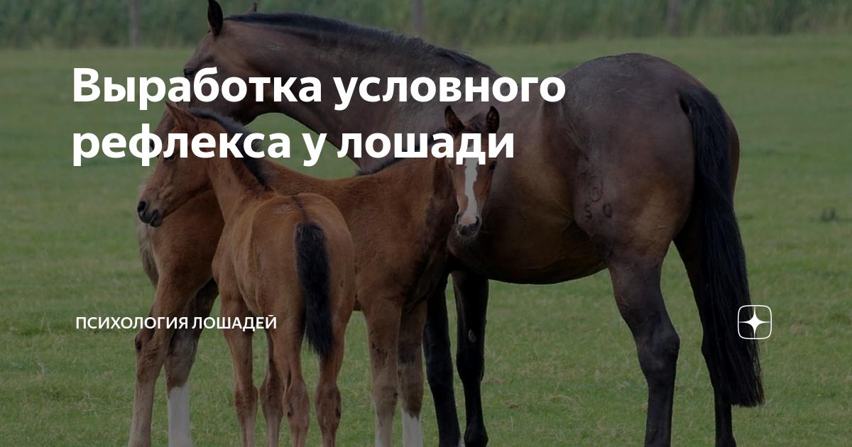 Как обучить лошадь верховой езде в домашних условиях
