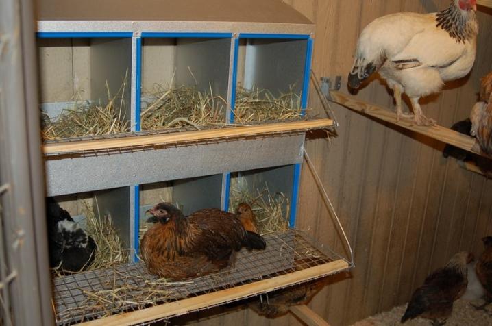 Как сделать гнездо для кур-несушек своими руками: размеры и инструкции