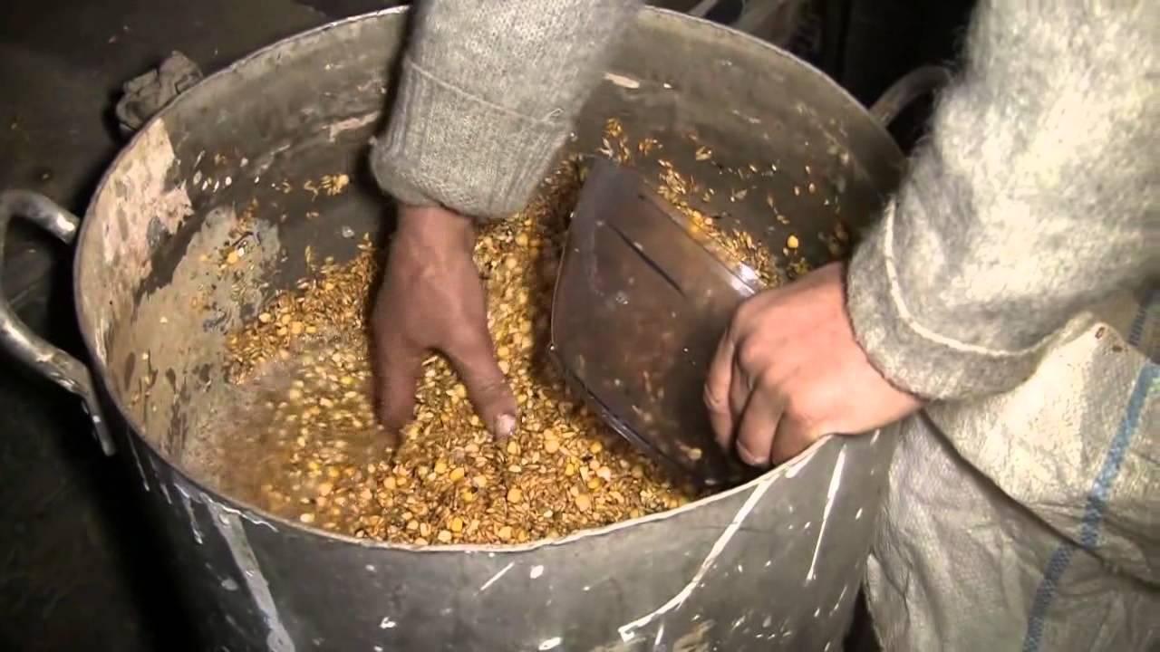 Как прорастить пшеницу для кур - пошаговая инструкция