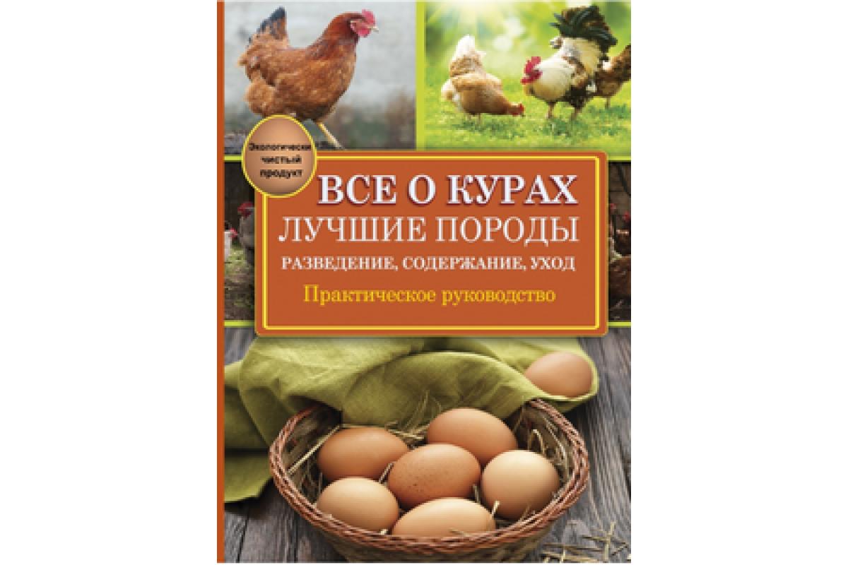 Промышленное птицеводство: основные породы кур и особенности отрасли
