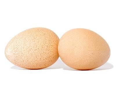 Характеристики яйценоскости цесарок