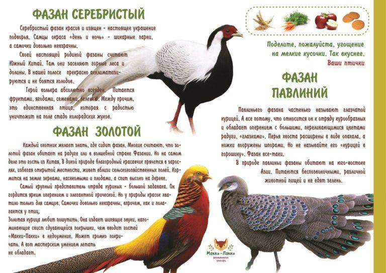 Птица фазан - описание вида, размножение, популяция