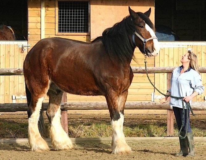 Сколько весит конь в среднем