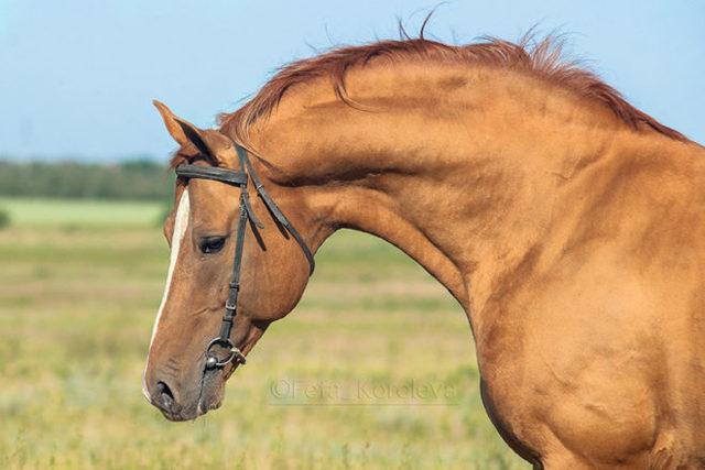 Золото донских степей — чудесная донская лошадь