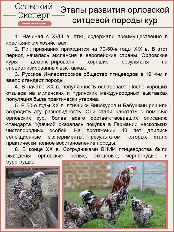 Куры суссекс: описание и выращивание породы