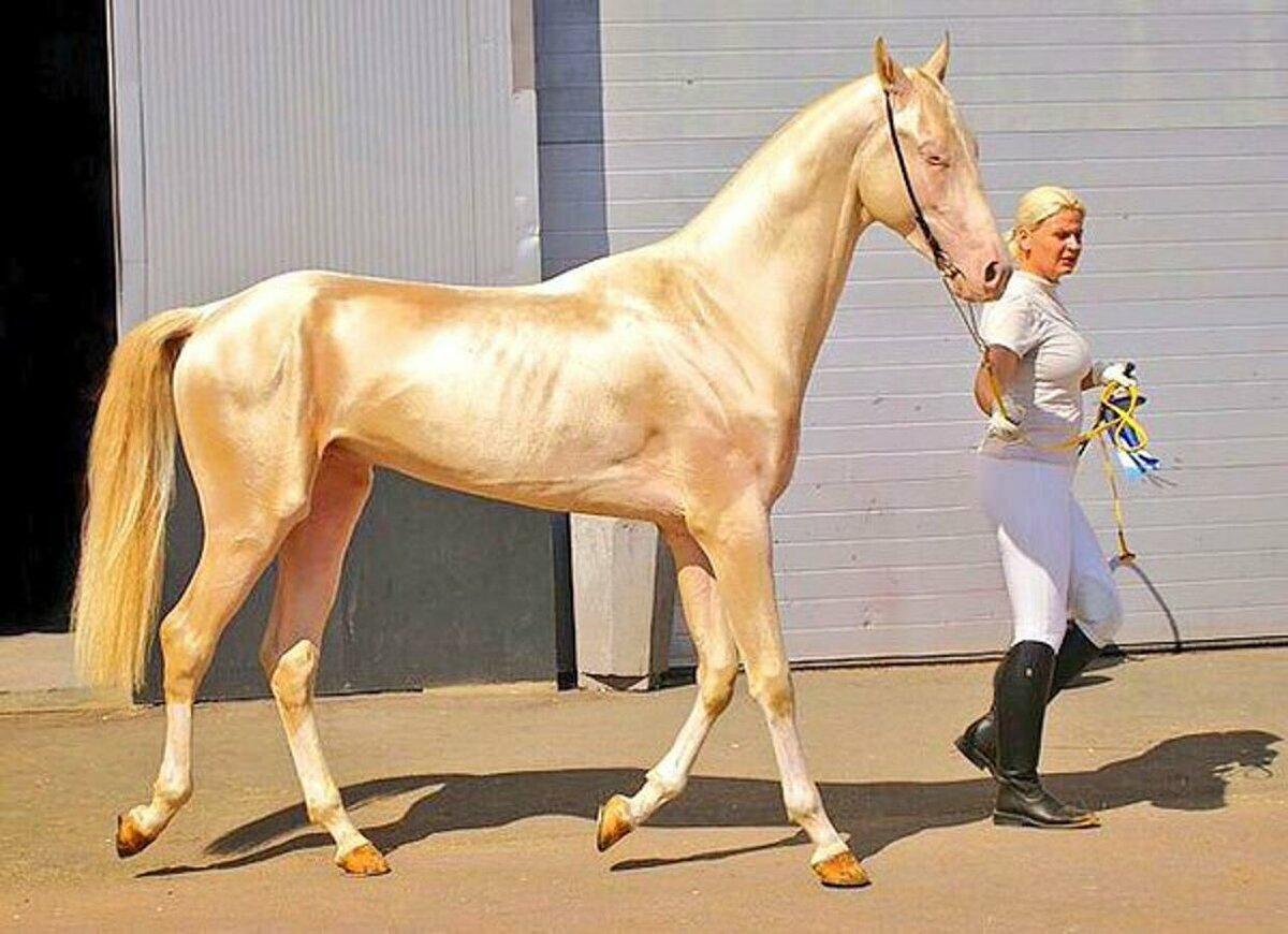 10 самых красивых лошадей в мире