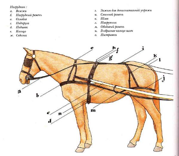 Упряжь конская, детали и элементы украшения, виды старинной верховой сбруи для лошади, быка и собаки, русская дуговая