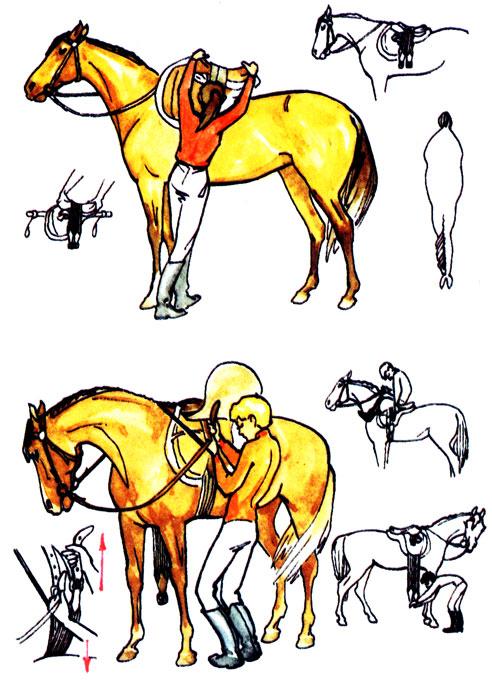 Как ездить на лошади: правила и типичные ошибки