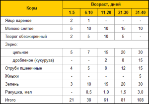 Вес индюков по месяцам: таблица и сколько может весить птица