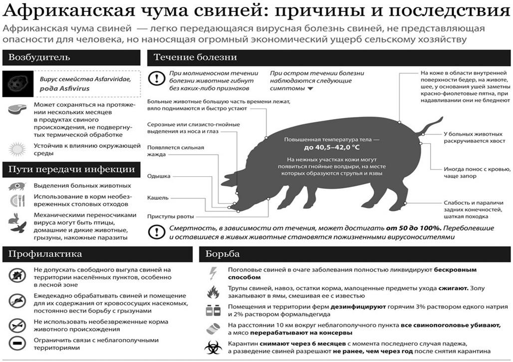 Африканская чума свиней: причины, симптомы и лечение