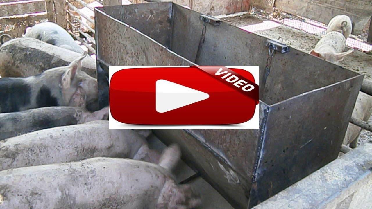 Как сделать кормушки для свиней и поросят своими руками: чертежи и фото бункерных и автоматических устройств