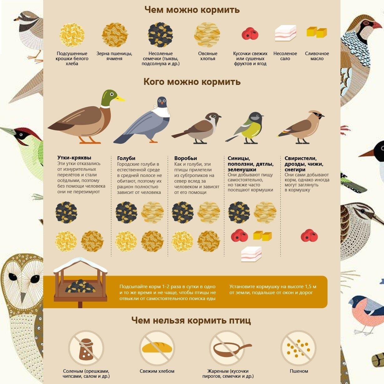 Чем кормить уток: что они едят зимой? чем питаются в домашних условиях? какой корм можно давать? кормление комбикормом