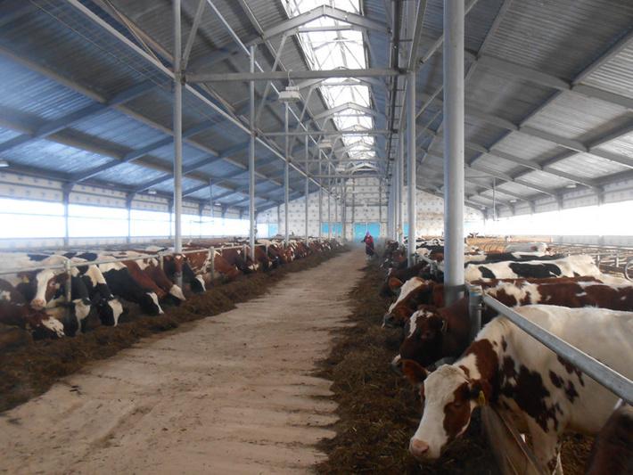 Как открыть молочную ферму