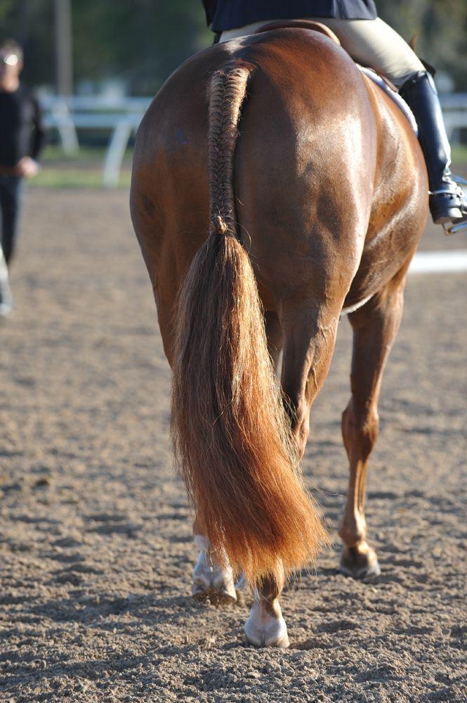 Хвост лошади: зачем нужен, как ухаживать и заплетать