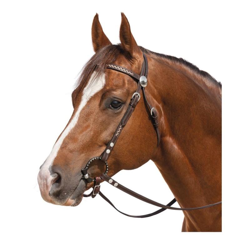 ✅ об уздечке для лошади: особенности использования узды и недоуздка - tehnomir32.ru